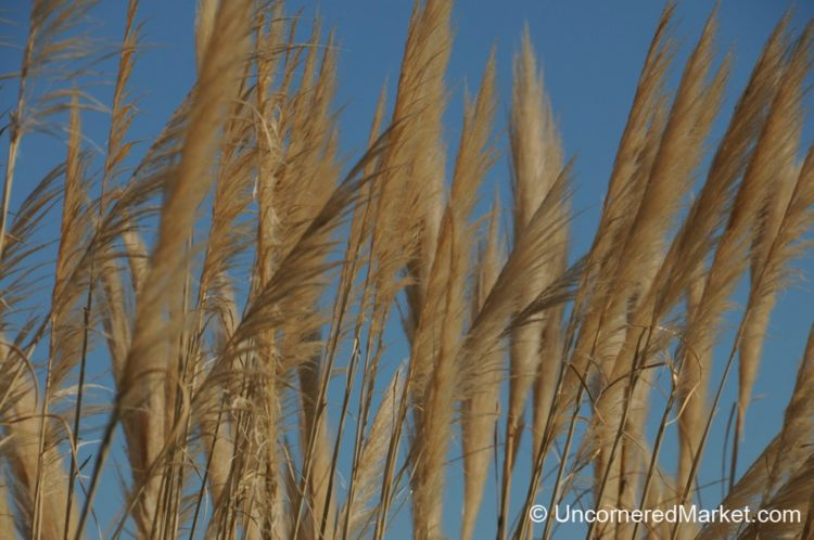 Blowing In the Wind - San Patricio del Chañar