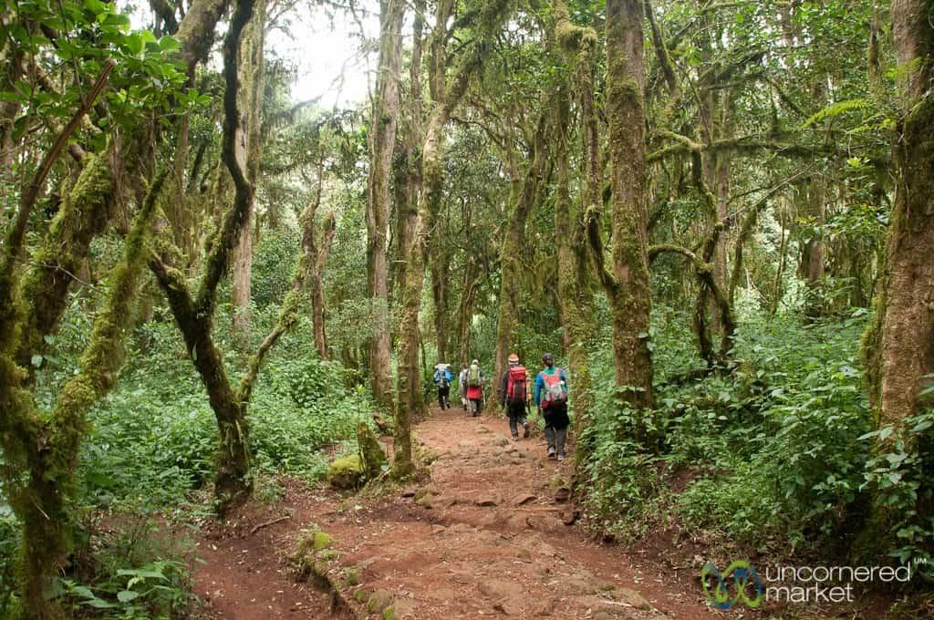 Climbing Kilimanjaro, Marangu Route Day 1